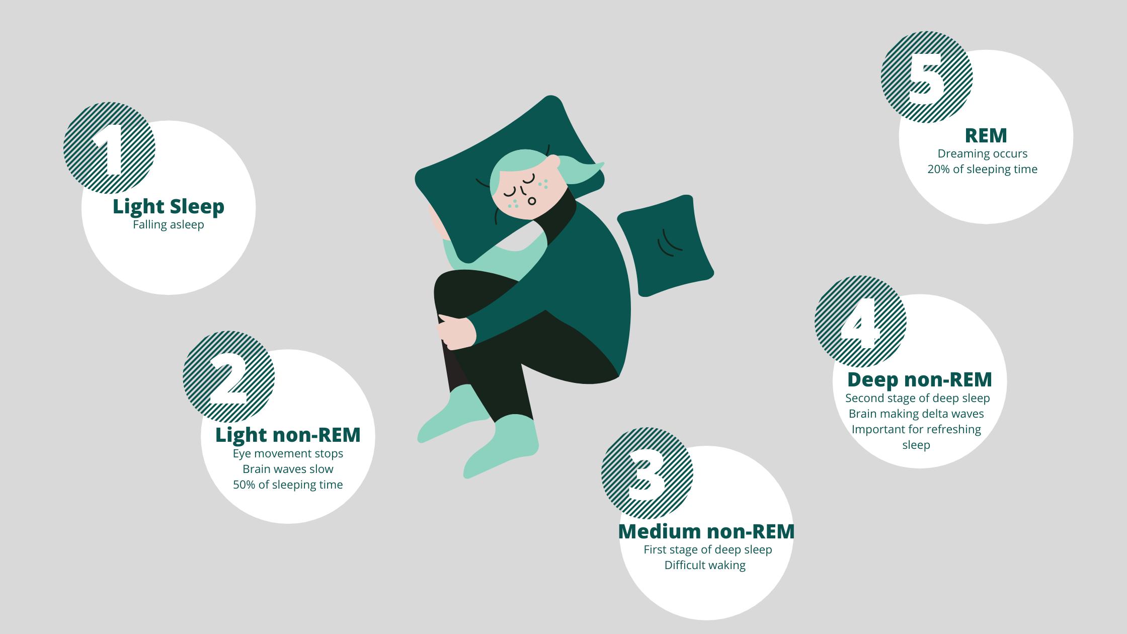 Sleep Stages - Revitalife Sleep Solutions